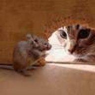 Кошка по имени Мышка